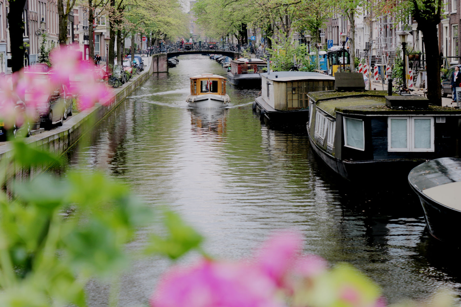 Boat on Amsterdam canal and flowers in the foreground
